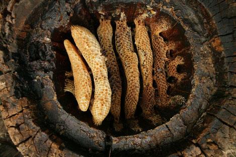 Во время раскопок в Грузии найден древнейший в мире мёд