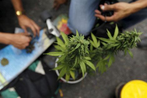 В Грузии ввели жесткие ограничения на курение марихуаны