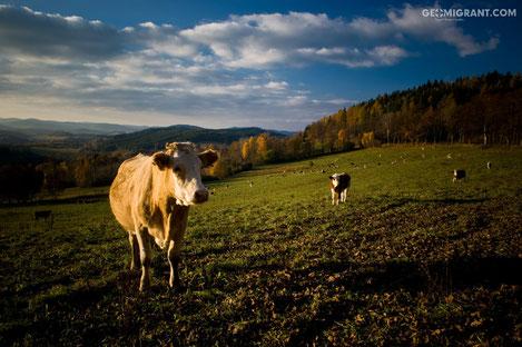 Введен запрет на ввоз животноводческой продукции из Грузии в Россию