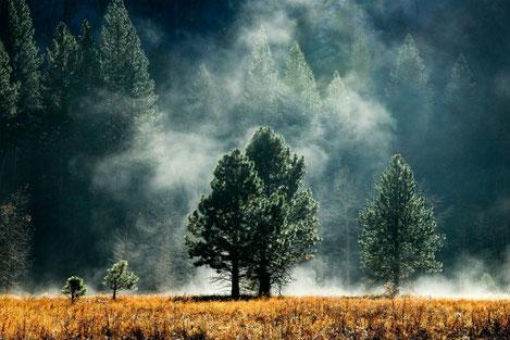 Леса Грузии и их обитатели