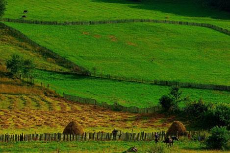 «Грузия маленькая страна и каждый метр ее земли должен быть в собственности грузинских граждан»