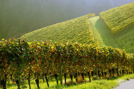 10 редчайших сортов винограда в Грузии