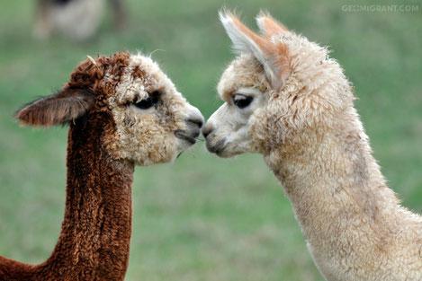 Рижский зоопарк подарил семь животных Тбилиси