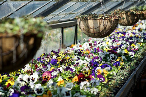 Тбилисский «Райский Сад»