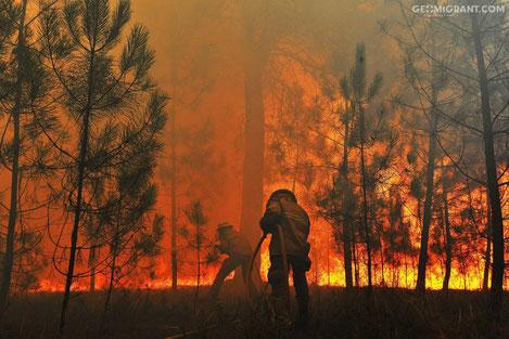 В Грузии горит национальный парк Боржоми