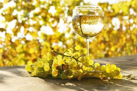 В Грузии презентовано вино новой концепции «vismino»