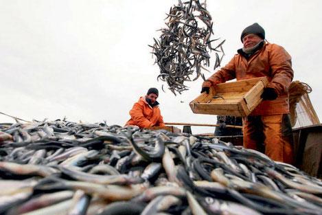 Грузия начинает экспорт черноморской рыбы в Евросоюз