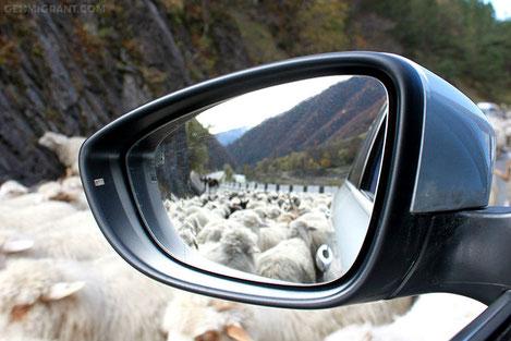 «Немца» в горы тяни -  Volkswagen провел тест драйв в Грузии