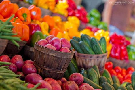 «Грузинская Овощная Компания» начинает экспортировать продукцию в Европу