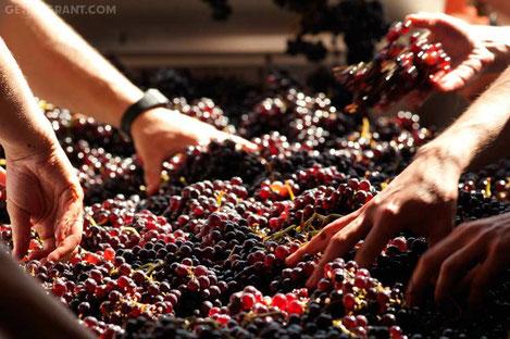 Кахетия вошла в число 10 самых интригующих регионов виноделия мира