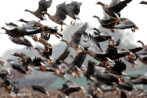 В Грузии открылся сезон охоты на перелетных птиц