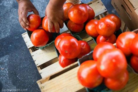Россельхознадзор: фрукты и овощи из Турции заменит Грузия