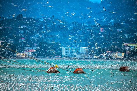 Грузия восстанавливает морское сообщение между Батуми и Сочи
