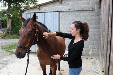 Diane Bourin en train de magnétiser un cheval bai