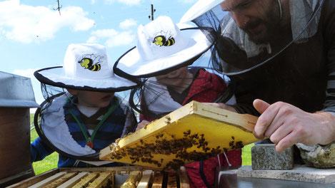 Bienen, Imkerei, Honig, Imkerei Rieger, Otting, Rudelstetten, Imker, Jungimker, Bienenkinder, Honig kaufen, Bienenkönigin kaufen