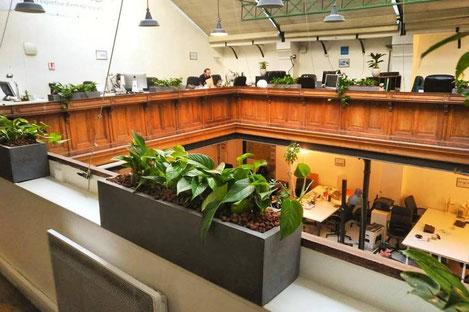 Paysagiste d'intérieur à Paris: location de plantes, décoration végétale des bureaux de votre entreprise