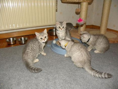 Bellas Kitten am Do, 31.7.14 (Alter 11 Wo. und 2 Tage)