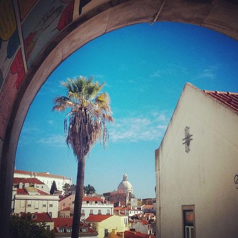Lisbon palm tree Portugal Poets Hostel