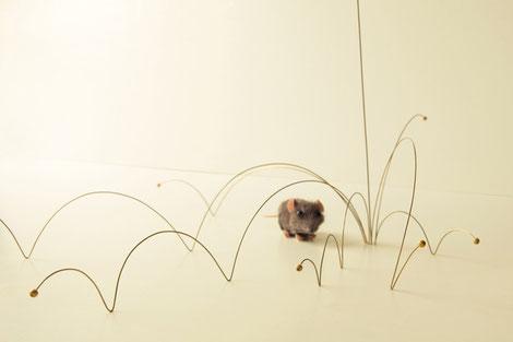 Chap 1 - La souris