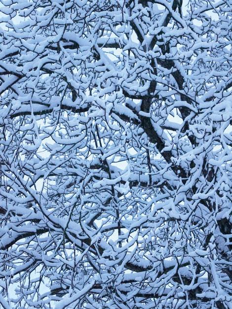 Kunstwerk WHITE WINTER'S DRAWING II auf ARTS IV als Acrylglas- oder Schattenfugenrahmen-Druck bestellen