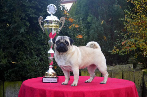 16.11.2014 Best Junior in Show