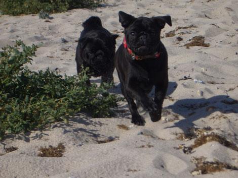 Maddox und Pearl am Strand