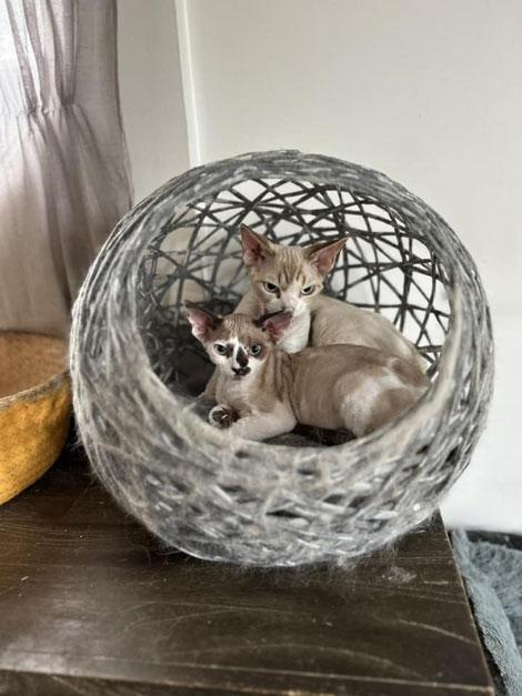 """les chats de Sandra Arnolfo : """"en pleine sieste"""""""