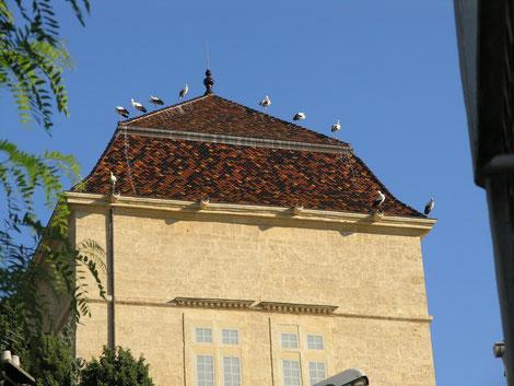 les cigognes ont fait escale sur le château de Castries