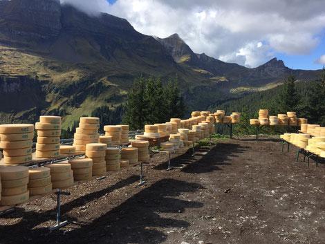 Chästeilet Alp Tschingelfeld