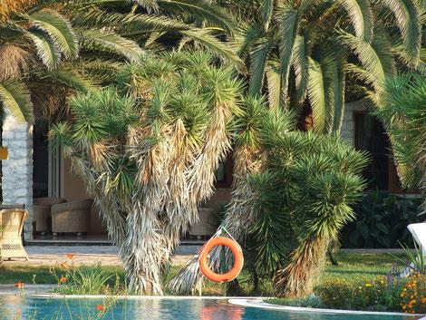 Bild Yucca aloifolia als fester Bestandteil in Parks, Gärten & Hotels