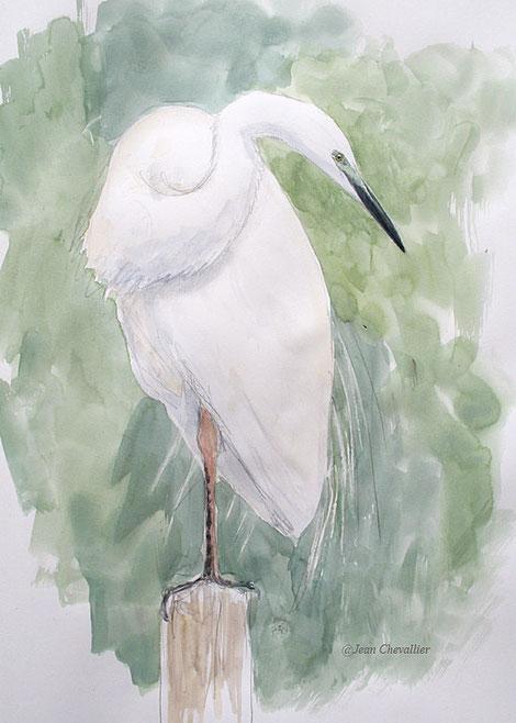 Grande aigrette, aquarelle Jean Chevallier