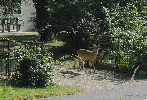Ma voisine devant chez elle ;-)