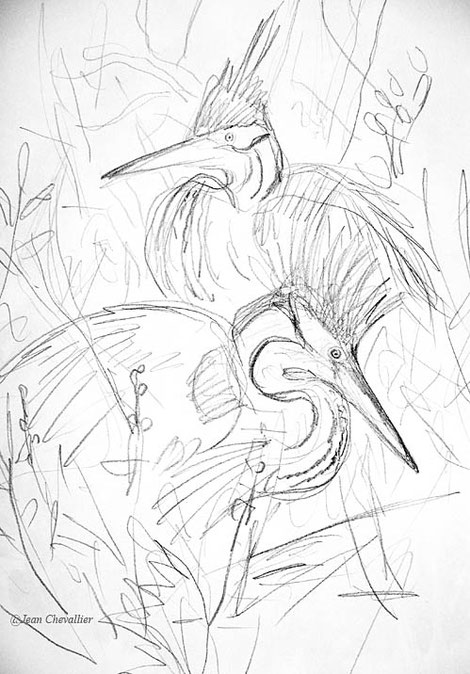 Couple de hérons pourprés au nid, croquis Jean Chevallier