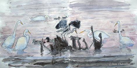 Grandes aigrettes, héron, cygne et canards, aquarelle (gelée) Jean Chevallier