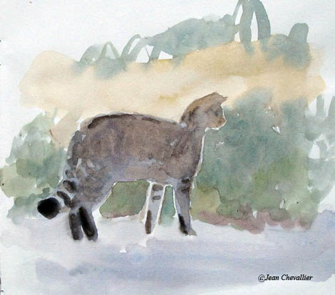 Chat forestier, aquarelle Jean Chevallier