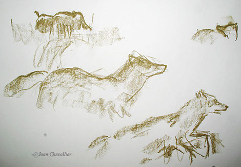 Loup et sanglier, Bialowieza Pologne mai 2006, dessin Jean Chevallier