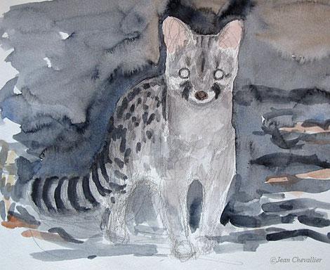Genette, aquarelle Jean Chevallier