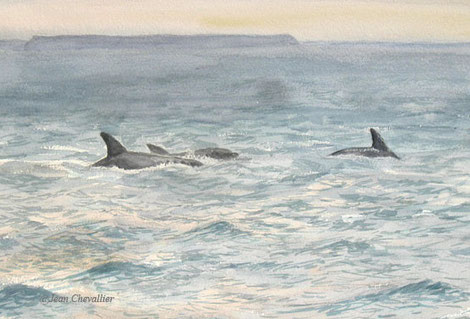 Grands dauphins, tursiops truncatus, aquarelleJean Chevallier