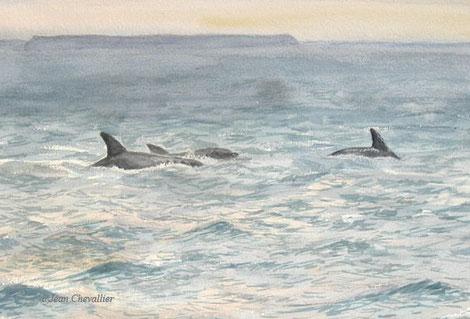 Grands dauphins, tursiops truncatus, aquarelleJean Chevallier