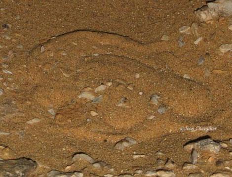 la même vipère des sables, une minute plus tard...