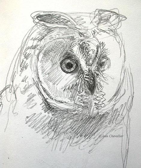 Hibou moyen-duc , Asio otus. Portrait, dessin Jean Chevallier