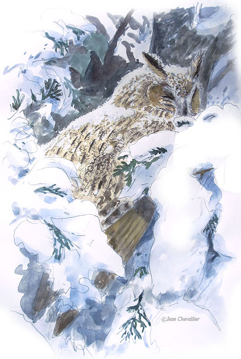 Sous la neige, hibou moyen-duc asio otus , aquarelle Jean Chevallier