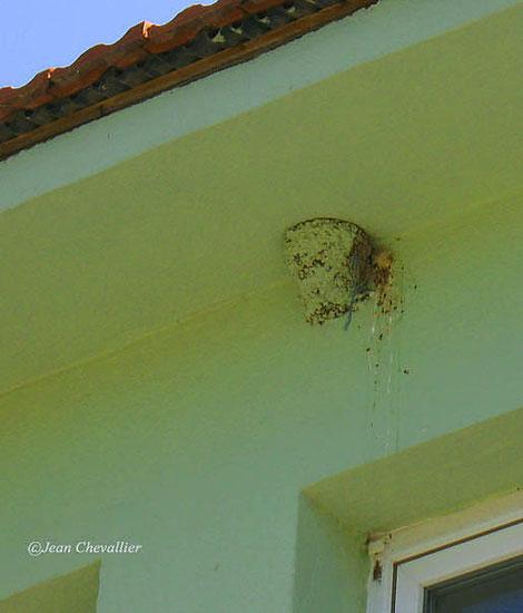 Nid d'hirondelle peint et façade repeinte; Dalyan 2013