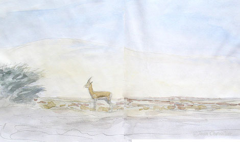 Gazelle dorcas, aquarelle Jean Chevallier