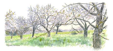 Verger au printemps en Essonne. Aquarelle de commande