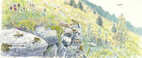 Prairie sèche et muret, site de Cruet / Ferroux, Savoie