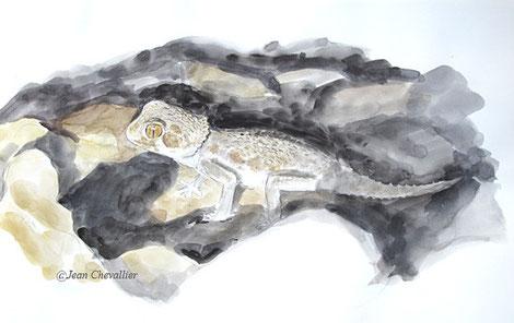 Gecko casqué, Tarentola chazaliae, aquarelle Jean Chevallier