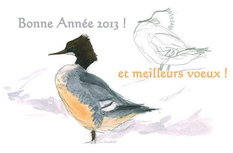 Harle bièvre sur neige, aquarelle Jean Chevallier