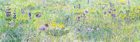 Prairie, illustration pour panneau, site de Cruet / Ferroux, Savoie