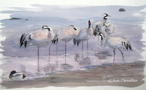 grues aquarelle Jean Chevallier